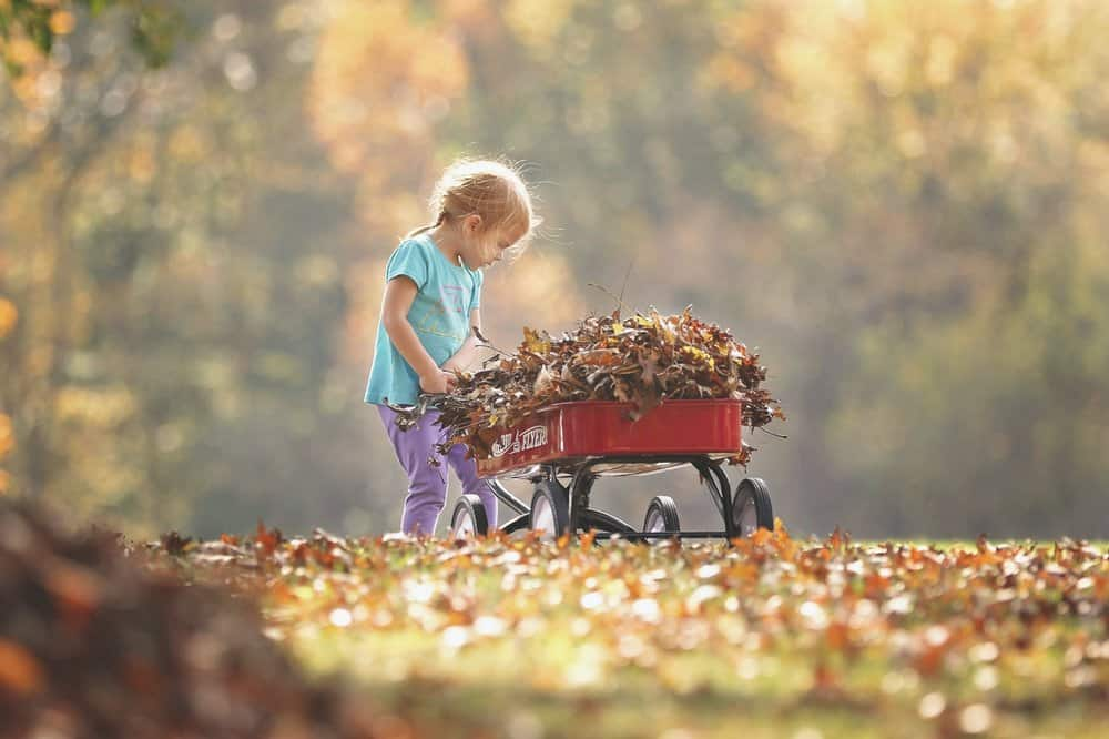 fall garden activities