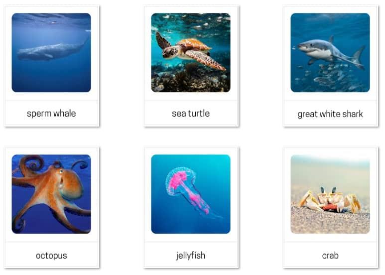 Sea animals Montessori 3-part cards
